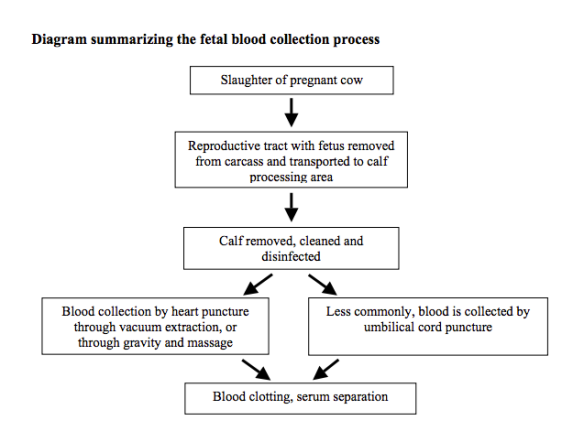 Bovine fetal serum collection diagram