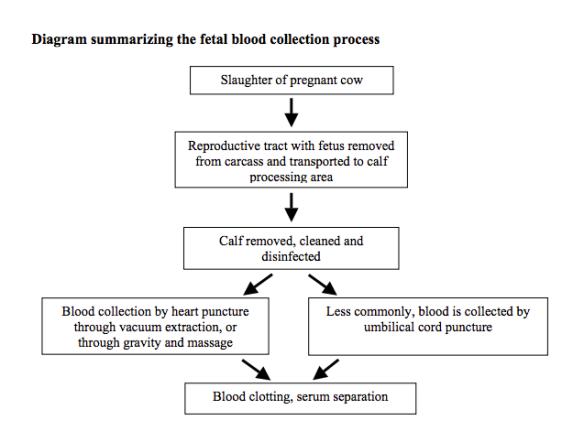 Bovine fetal serum collection diagram